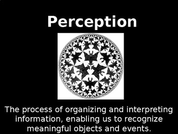 AP Psychology Lecture Slides: ALL OF (the whole unit!) Perception