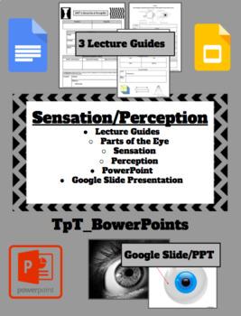 AP Psychology Sensation/Perception Unit