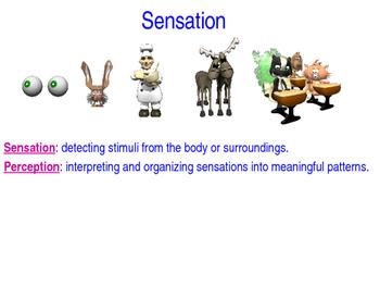 AP Psychology Sensation Power Point