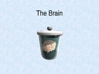 AP Psychology - The Brain Power Point