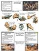 AP World History Paleolithic & Neolithic Lesson Plan Bundle