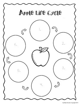 APPLE LIFE CYCLE CUT AND PASTE, PARTS, CAN HAVE ARE