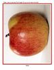 APPLES Theme Literacy and Math Activities, Printables and Centers