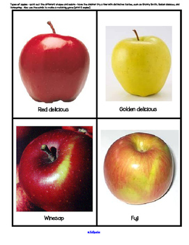 APPLES Theme Math and Literacy Activities, Printables and Centers Preschool