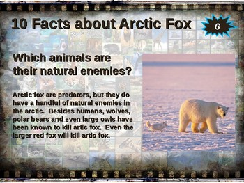 ARCTIC FOX: 10 facts. Fun, engaging PPT (w links & free graphic organizer)
