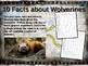 ARCTIC MAMMALS BUNDLE 7 PPTs WOLVERINE FOX CARIBOU MUSK OX WOLF POLAR BEAR ORCA