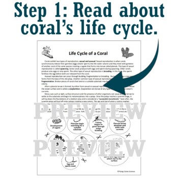 ASEXUAL + SEXUAL REPRODUCTION ACTIVITY Life Cycle of Coral NGSS MS-LS3-2