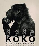 ASL Koko Lesson