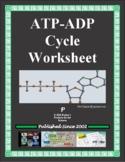 ATP-ADP Cycle Worksheet (Cellular Energy)