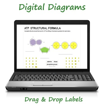 ATP Diagrams & Study Guide - Chemical Energy for Cellular Work