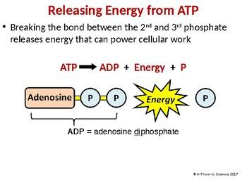 ATP Powerpoint