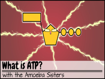 ATP Recap ANSWER KEY by the Amoeba Sisters (Amoeba Sisters Answer Key)