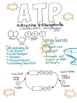 ATP Summary Sheet