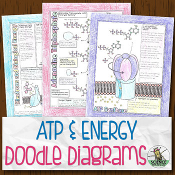 ATP and Cellular Energy Biology Doodle Diagram Notes