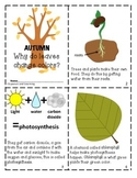 AUTUMN:  WHY DO LEAVES CHANGE COLORS?  Mini reader, vocabulary cards & foldable