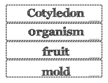 AZ Science Vocabulary Wall Cards