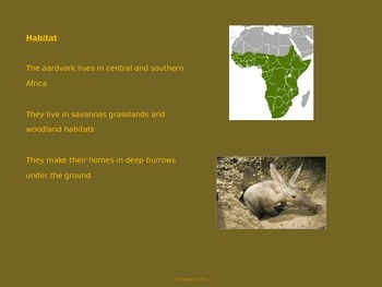 Aardvark - Powert Point lesson
