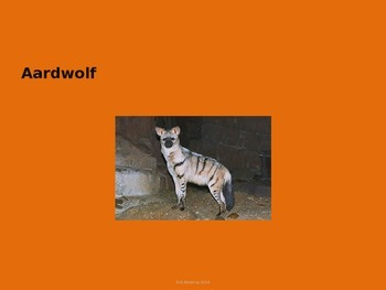 Aardwolf - Power Point - Facts History Diet Pictures