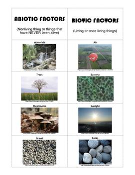 Abiotic Biotic Card Sort