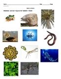 Abiotic vs Biotic Worksheet