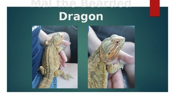 About Bearded Dragons