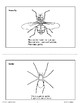 About Insects