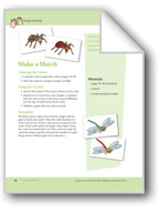 About Insects: Center Activity
