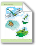 About Insects: Storyboard Pieces