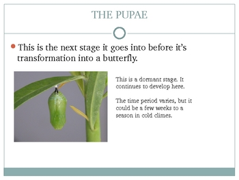 About the Butterfly