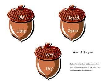Acorn Antonyms