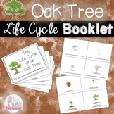 Acorn to Oak Tree Life Cycle Booklet Spring/Fall Activity Montessori Inspired