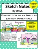 Action Potential/Conduction Sketch Doodle Notes,Student No