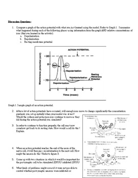 Action Potential Modeling Activity