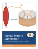 Action Potential, Muscular Threshold Stimulus, and Workload A Virtual Lab