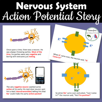 Action Potential Story