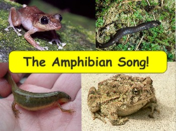 Science Songs - The Amphibian Song!