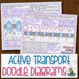 Active Transport Biology Doodle Diagrams