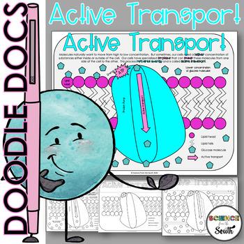 Active Transport Coloring Worksheet 9 Differentiated Versi