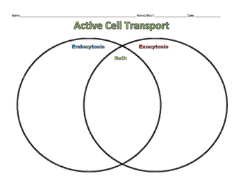 Active Transport - Endo and Exocytosis Graphic Organizer