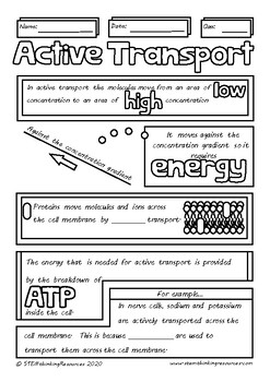 Active Transport Doodle Review Middle High School Biology