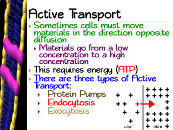Active Cell Transport: PowerPoint, Student Guided Notes, Worksheet