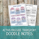 Active and Passive Transport Doodle Notes