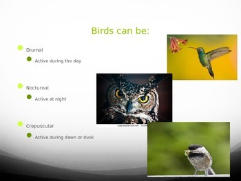 Active birds powerpoint