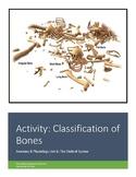 Activity: Classification of Bones