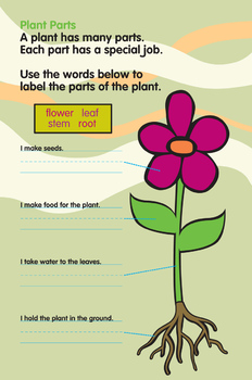 Activity Worksheets - Plant Parts