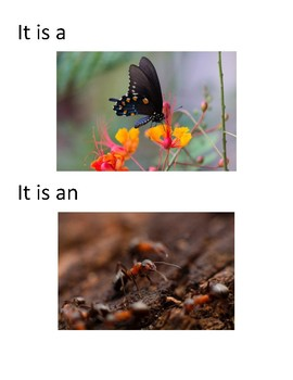 Adaptable book for Special Education- Bugs!