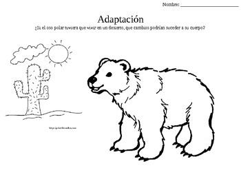 Adaptation Adaptacion