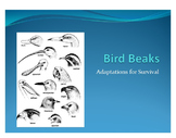 Adaptation Advantages Lab - Bird Beaks