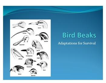 Adaptation Advantages Lab - Bird Beaks