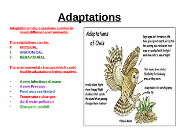 Adaptation, Competition, Indicator Species Power point